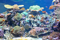 Colourful coral reef Stock Photography