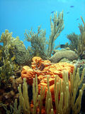 Colourful coral reef scene. A colourful coral reef scene centred on a bright orange sponge, showing a variety of soft corals and marine plants.  Blue Chromis Royalty Free Stock Image