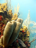 Colourful coral reef scene Stock Images