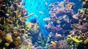 Free Colourful Corals Royalty Free Stock Images - 99459819