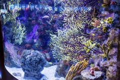 Colourful corals Stock Image