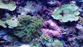 Colourful corals Royalty Free Stock Images