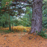A Colourful Corner. Looking at a colourful corner of the forest royalty free stock image