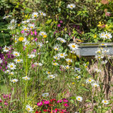 Colourful Country Garden. A goldfinch admires the flowers in an English country garden royalty free stock images
