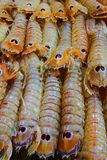 Colourful crustaceans Stock Photos