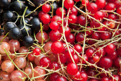 Colourful currants in assorted colours Royalty Free Stock Images