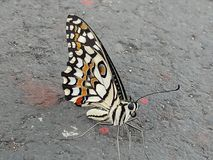 Colourful Cute butterfly Royalty Free Stock Photos
