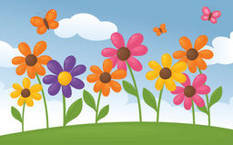 Colourful daisies. Royalty Free Stock Images