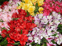 Colourful daylilies. Abundance of colourful daylilies at FLOWERS EXPO international exhibition, Moscow, 2014 stock photos