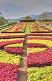 Colourful Decorative Foliage Design in Botanic Garden of Portuguese Island. View of the colourful graphic design achieved using the foliage of plants in the royalty free stock image