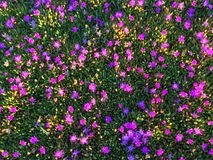 Colourful della stagione primaverile Fotografia Stock