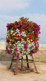 Colourful display of pink white red and yellow petunias on a stand at the seaside Royalty Free Stock Photography