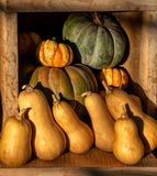 Colourful display of pumpkins and squash vegetables stock photography