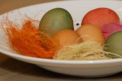 Colourful dyed eggs Stock Image