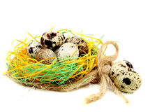 Colourful easter eggs in the nest. Royalty Free Stock Photos