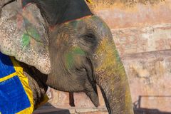 Colourful elephant in Jaipur, Rajasthan, India Stock Photos