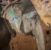 Colourful elephant in Jaipur, Rajasthan, India Stock Photo