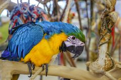 Colourful Exotic Parrot For Sale At The Bird Market. Close view stock images