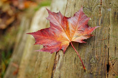 Colourful Fall Leaves. On a nice day royalty free stock photos