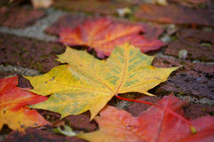 Colourful Fall Leaves. On a nice day stock photo