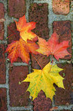 Colourful Fall Leaves. On a nice day stock photos