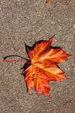 Colourful Fall Leaves. On a nice day stock images