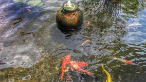 Colourful Fancy carps and the fountain in the pond Stock Image