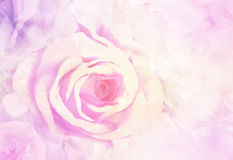 Colourful fantasy Ice with Rose soft pink blur . royalty free stock photography