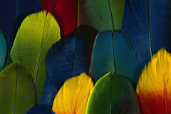 Colourful feather Stock Photos
