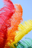 Colourful Feathers. Four colourful feathers fanned out and isolated against a bright blue sky Stock Image