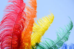 Colourful feathers. Five colourful feathers fanned out and isolated against a bright blue sky Stock Images