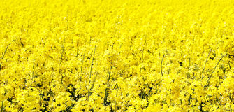 Colourful field Stock Image