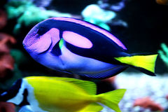 Colourful fish Royalty Free Stock Photos