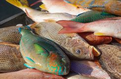 Colourful fish in Asian market royalty free stock images