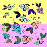 Colourful fish  background. Colourful  fish on a colored background Royalty Free Stock Photo