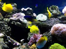 Aquarium fish Royalty Free Stock Photos