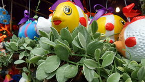 Colourful Fish plant hanger Stock Photography