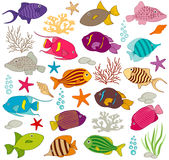 Colourful Fish Set Royalty Free Stock Photo