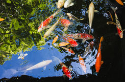 Colourful fish with sky and green reflection. For background Stock Images