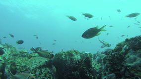Colourful Fish Swim By A Coral Reef. Mindelo, Cape Verde stock video footage