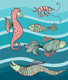 Colourful fishes and sea creatures Royalty Free Stock Photo