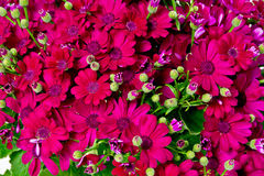 Colourful flower background Royalty Free Stock Images