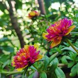 Colourful flower blooms stock images