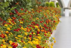 Colourful flower border flowering plants in a garden photo.  stock photo