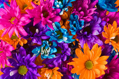 Colourful Flower Bouquet. A colourful bouquet of Ten-Rayed Sunflowers Royalty Free Stock Photography