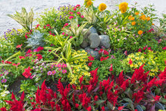 Colourful flowerbed Royalty Free Stock Photography