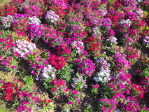 Colourful flowerbed during Spring season Stock Photos