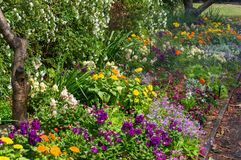 Colourful flowerbed on sunny day Royalty Free Stock Photos