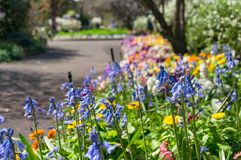 Colourful flowerbed on sunny day Royalty Free Stock Photography