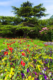 Colourful Flowerbeds Stock Image